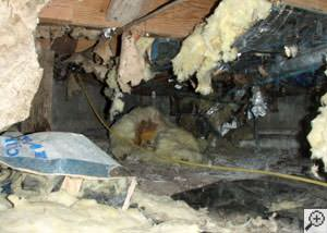 A messy crawl space filled with rotting insulation and debris in Apalachin.