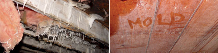 Home Mold in NY, including Ithaca, Binghamton & Endicott.