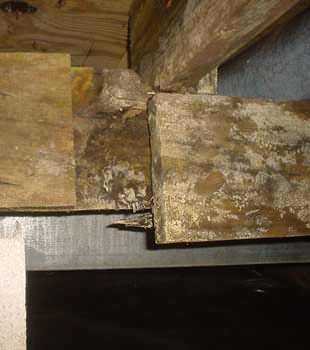 Extensive basement rot found in Elmira by Southern Tier Basement Systems
