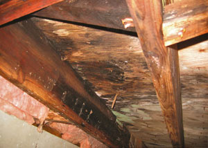 Extensive crawl space rot damage growing in Newark Valley